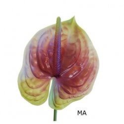 ANTHURIUM MALVA **ARTIFICIAL**