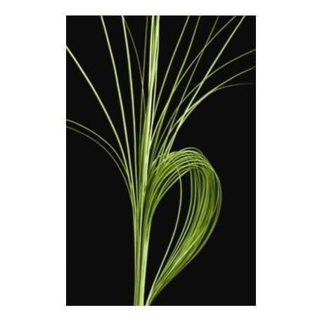 STEEL GRAS 120 CM