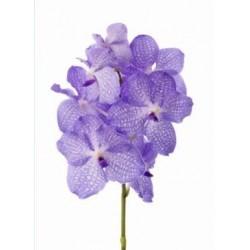 SANTOS-ORQUIDEA VANDA LAVANDA CAJA 16 flores