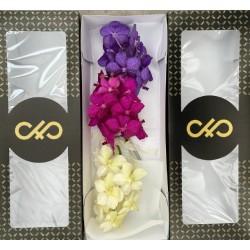 VANDA TRES COLORES (caja de 25 flores)